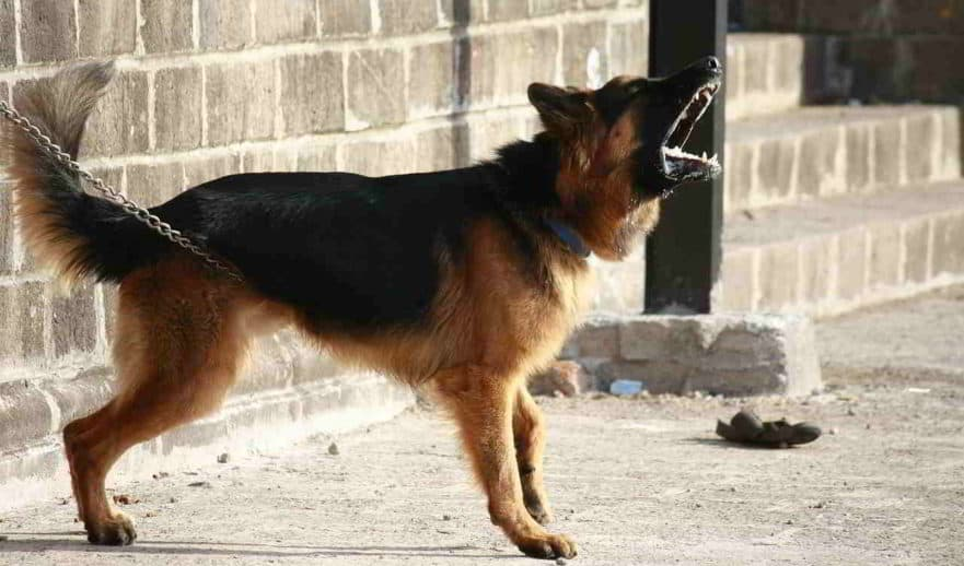 10-Reasons-Your-German-Shepherd-Training-Can-Fail