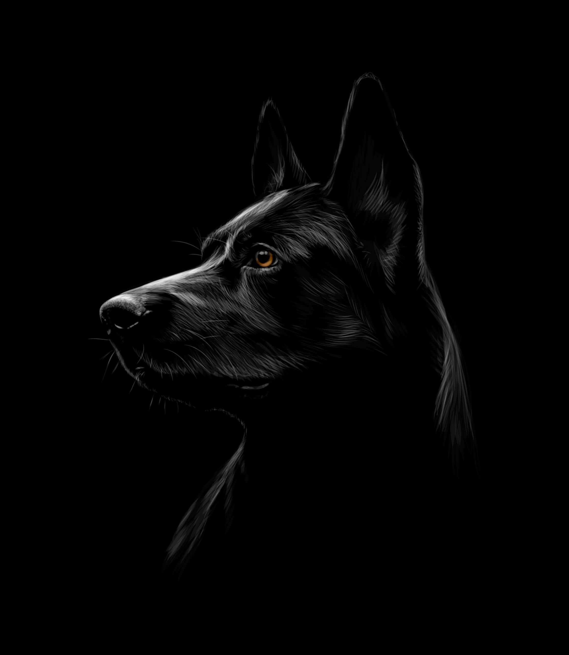 The Black German Shepherd:10 Facts You Didn't Know
