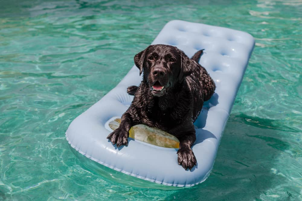 How to keep your dog cool in the hot weather?