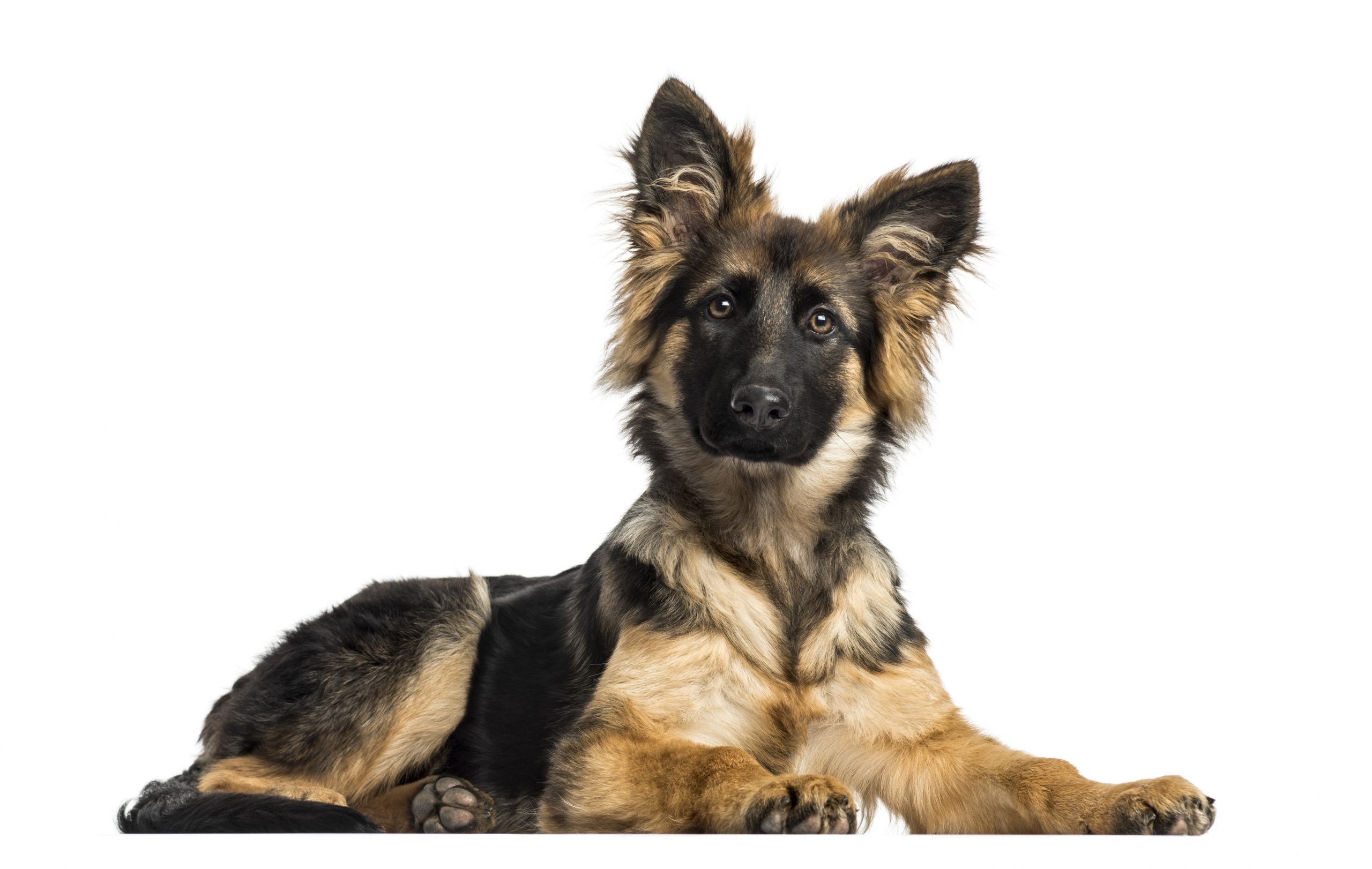 """Featured image for """"10 Books Every German Shepherd Owner Must Read"""""""