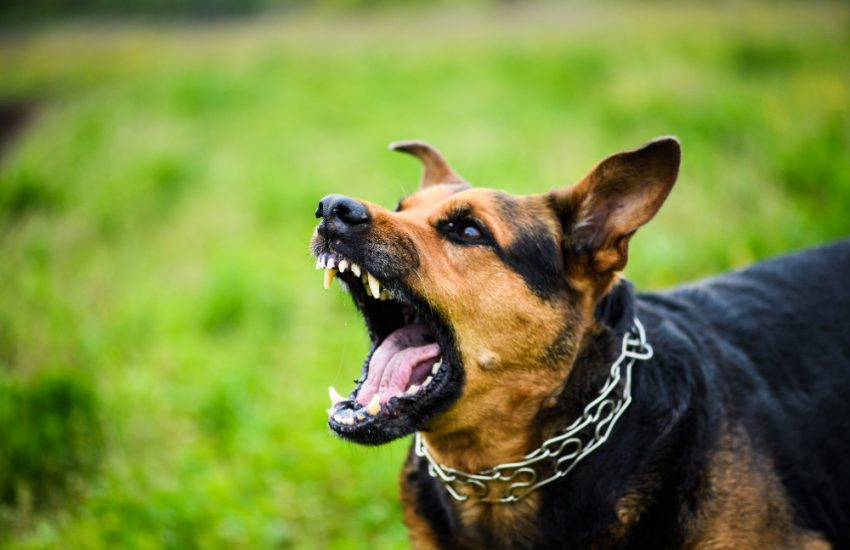 How to Stop Your Dog From Excessive Barking?